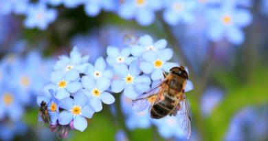 il respiro dell'ape